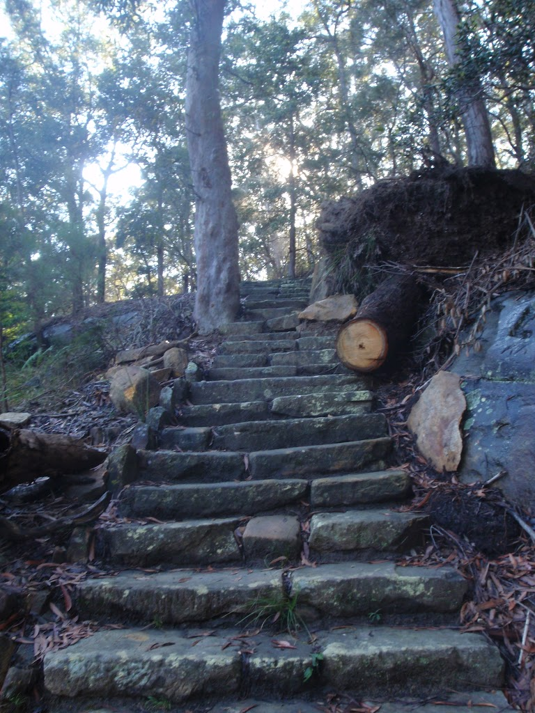 stone steps leading up out of Berowra Valley (70624)