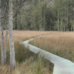 Great North Walk boardwalk