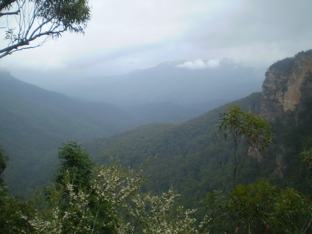 Lyrebird Lookout (7205)