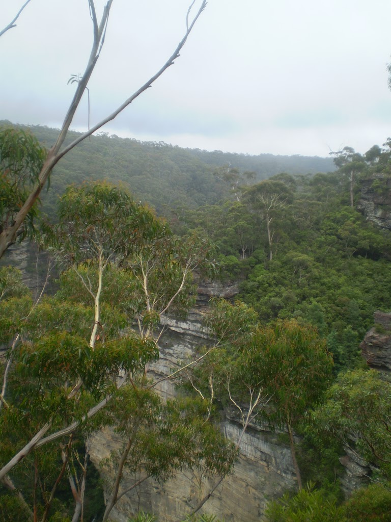 View from Lyrebird Lookout (7208)