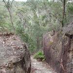 Track between rocks (73224)