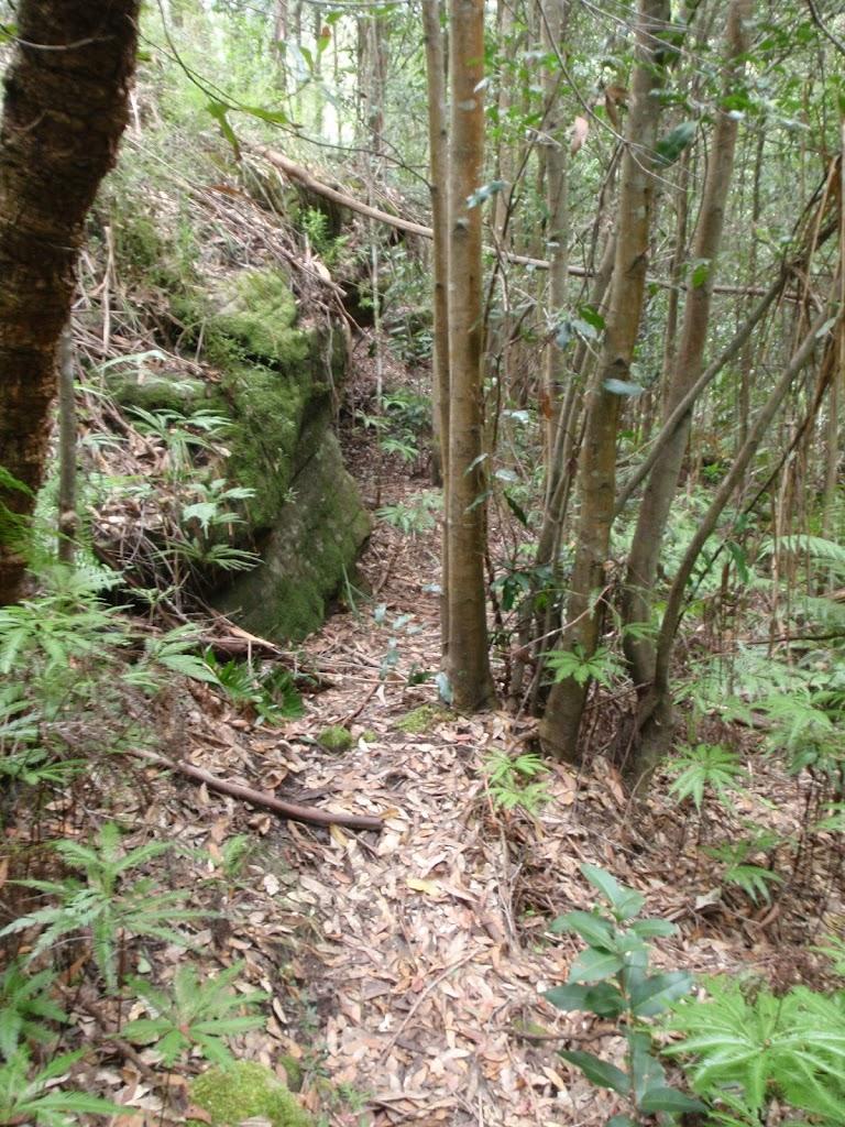 Florabella Track (73353)
