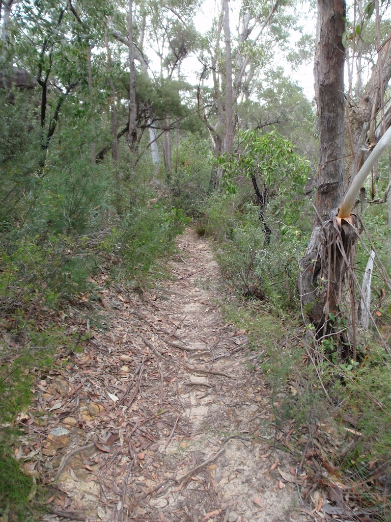Track above Glenbrook Gorge (73599)