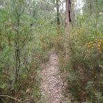 Track through heath (73728)
