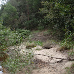 Sandy bank along Glenbrook Creek (73827)