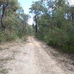 The Oaks Fire Trail (73965)