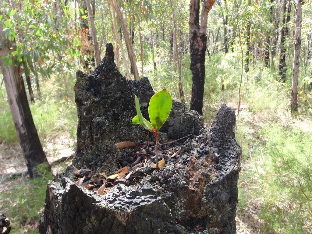 Leaf in stump