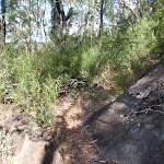 Track below Buniyah Lookout