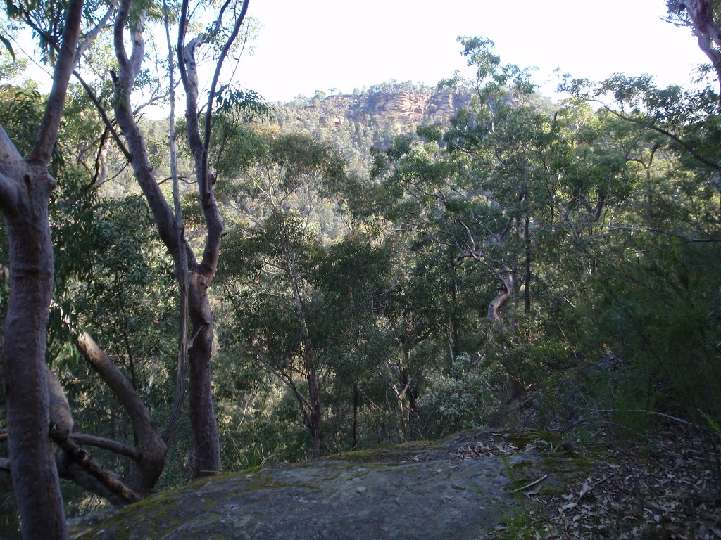 Track up from Glenbrook Creek to Martin's Lookout (74385)