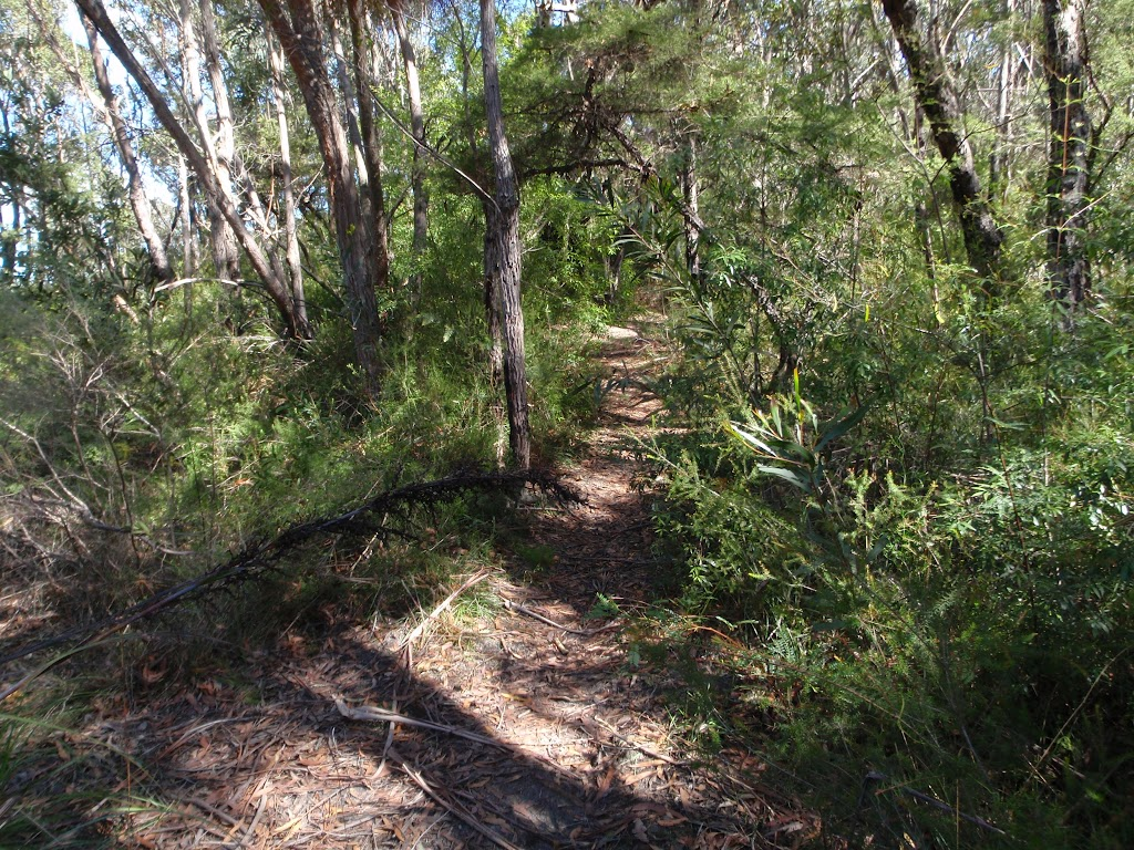 Track to cliff lookout
