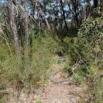 Track through heath (74538)