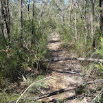 St Helena ridge track (74670)