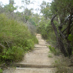 Well-drained and maintained this track is a perfect access trail to the picnic area