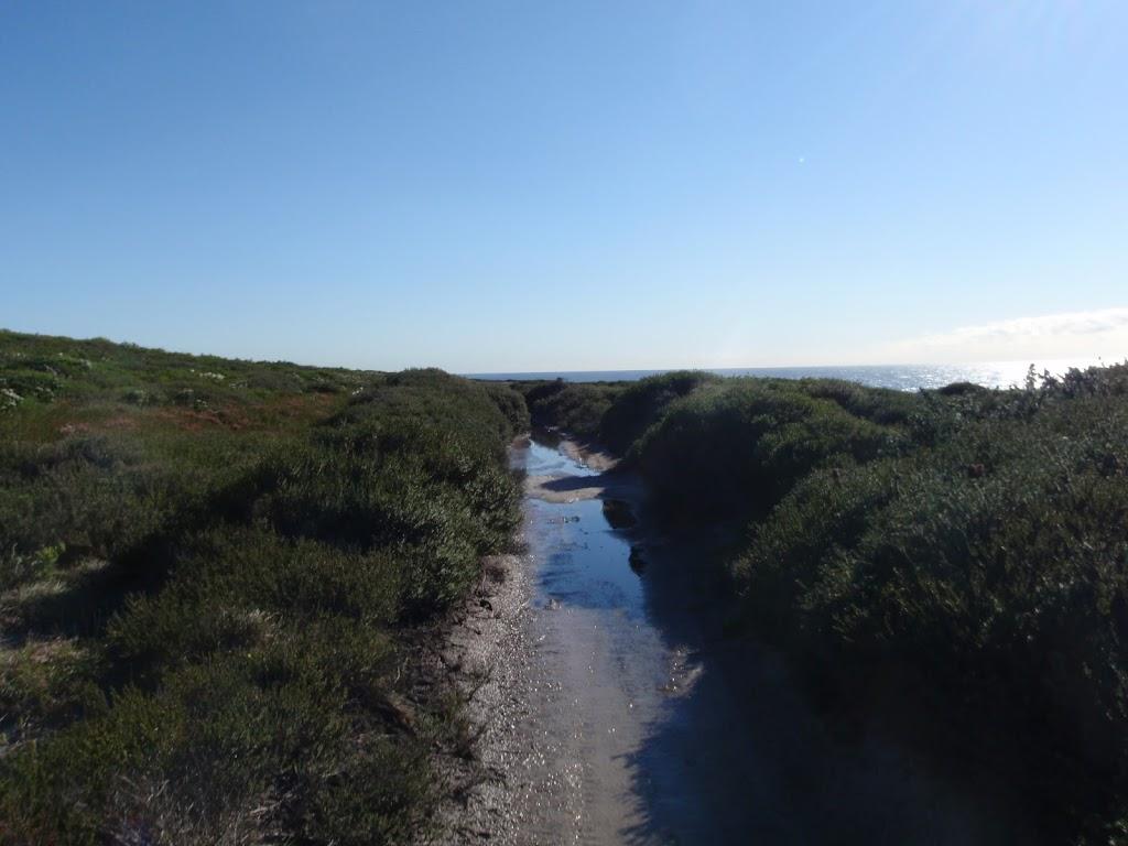winding through thick heath (75498)
