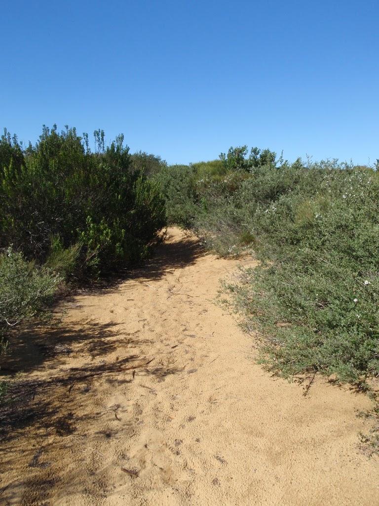 Cape Bailey track Sth of Tabbigai Gap