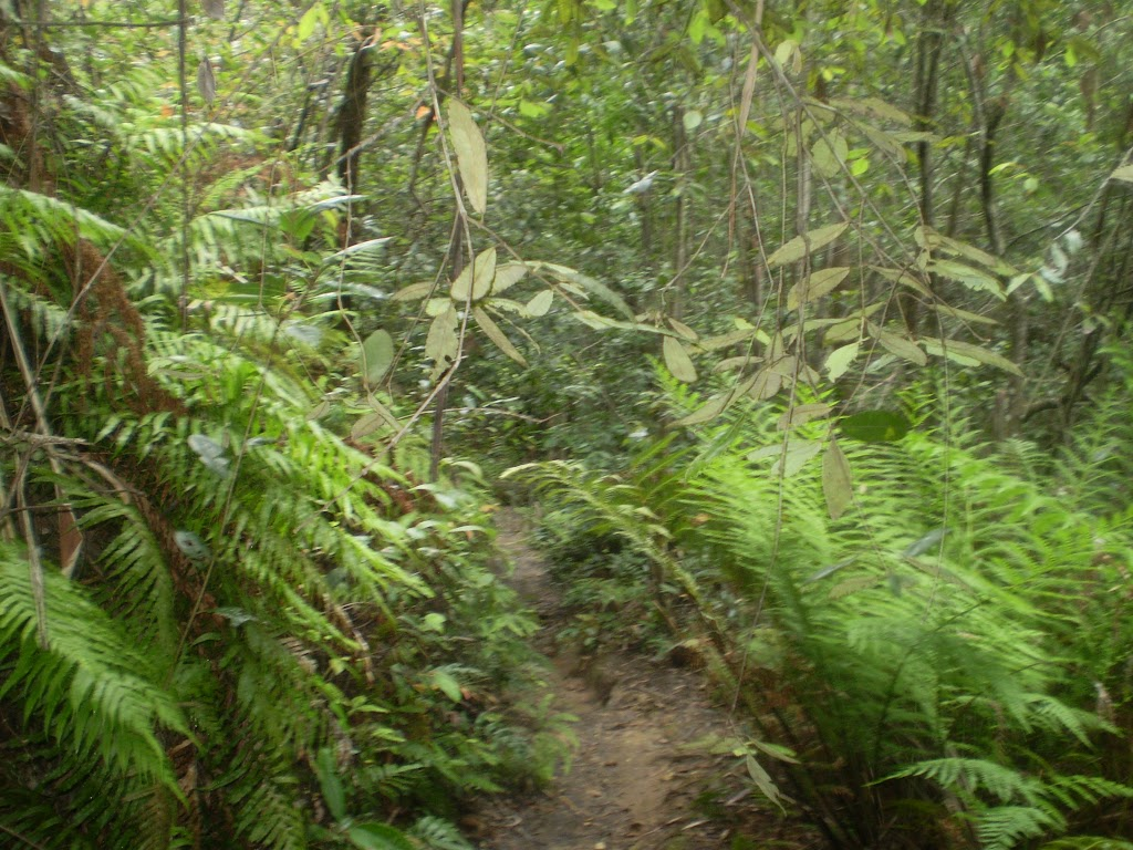 The ferns and temperate rainforest next to Denfenella Crk