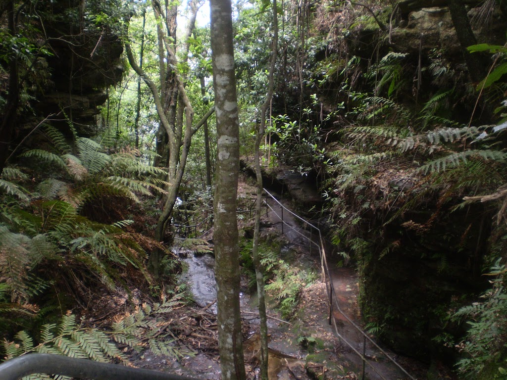 The surrounding jungle on the Wentworth Pass Trail (7628)