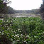looking across the lagoon (76642)