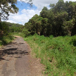 heading through the bush (77080)