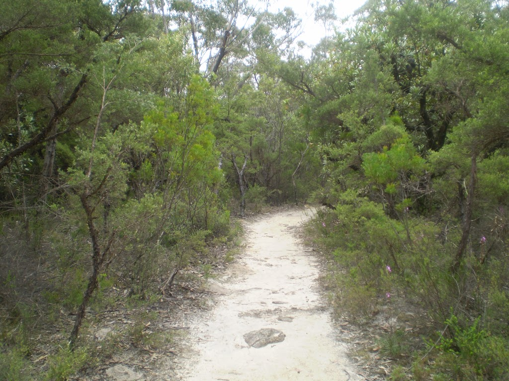 Track down to Lyrebird Lookout