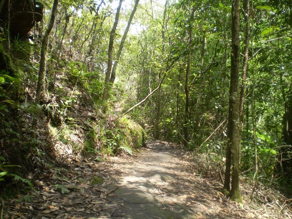 Overcliff Walk (7721)