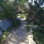 creekside bushtrack (77344)