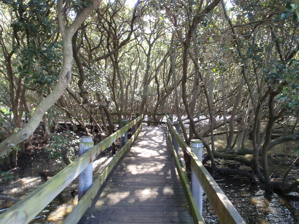heading through the mangroves