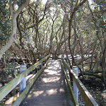 heading through the mangroves (77500)