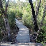 following a boardwalk (77572)