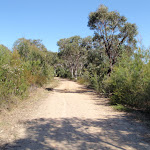 Track up spur to Pennant Hills Park