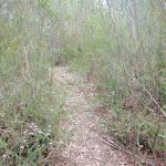 Leaf litter along the track (77851)