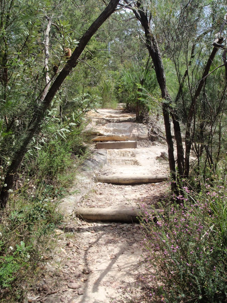 Log steps up to Pennant Hills