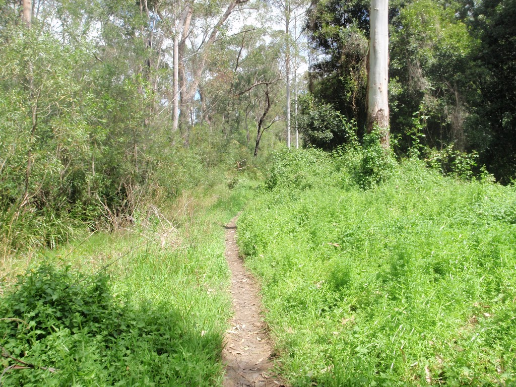 Bush track surrounded by weeds