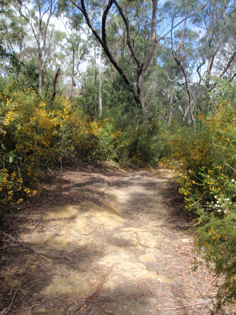 Service trail towards Lane Cove River (78067)