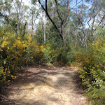 Service trail towards Lane Cove River