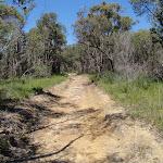 Continuing through the bush (78583)