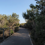 path winding through tall heath (79138)