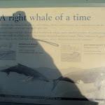 whale watching info sign (79198)