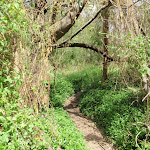 Track through hanging vines (79687)