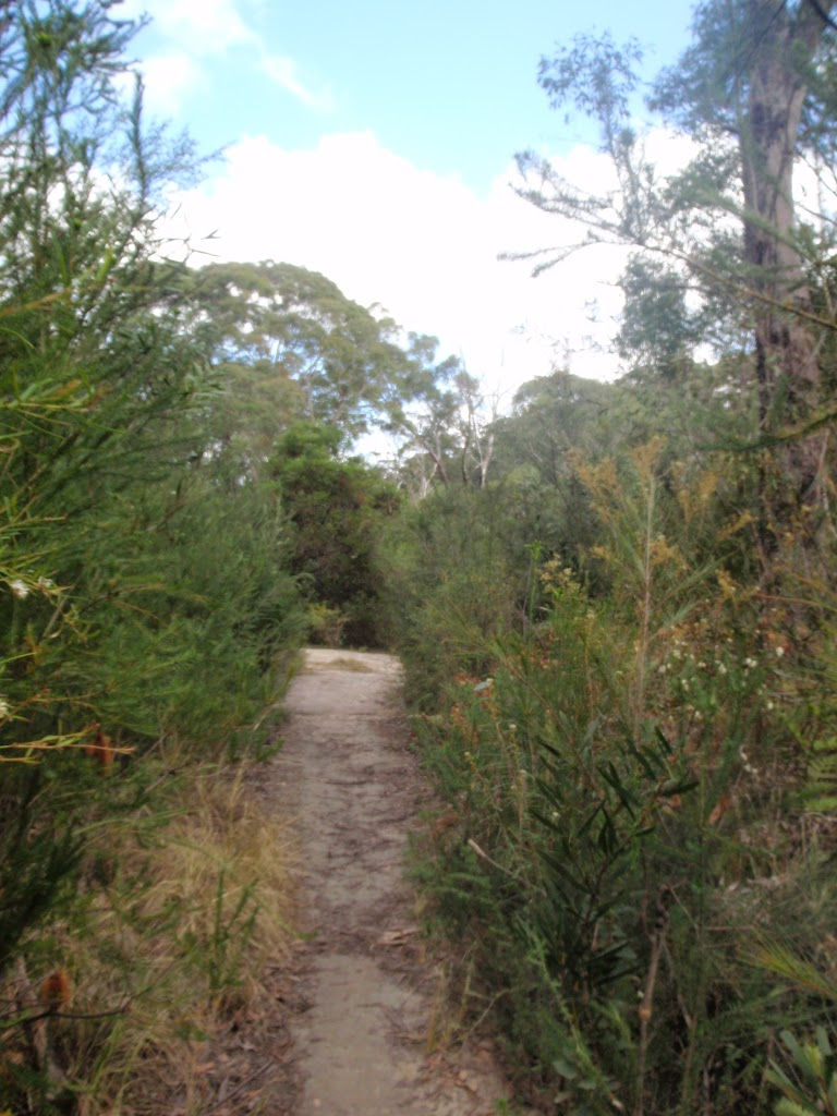 Bush track through heath