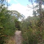 Bush track through heath