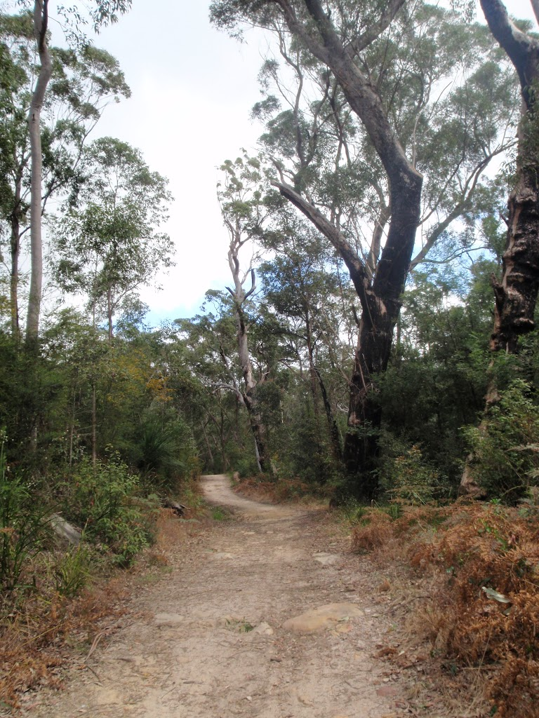 Track towards Lane Cove River