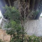 Track under the motorway (79945)