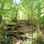 Track through dense bush (80077)