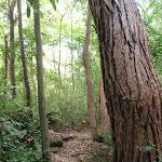 Track around wonderful tree (80110)