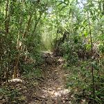 Track through the bush (80152)