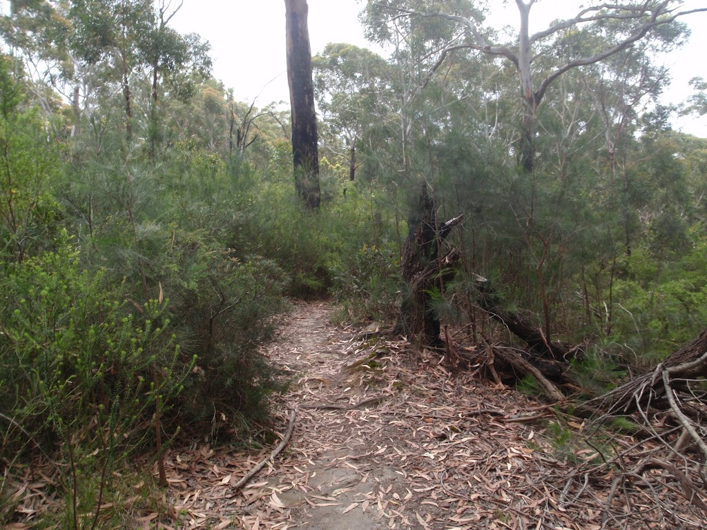 Track nearing Pennant Hills Park