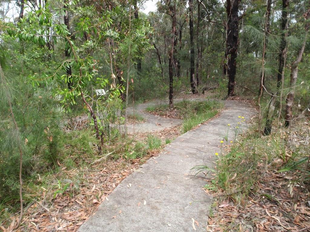 Mambara Track winding through the trees