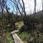 Duckboarding on the Thredbo River track (83395)