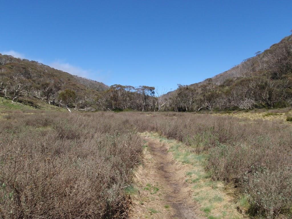 Walking along the Thredbo River track